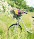 Cykel i naturen